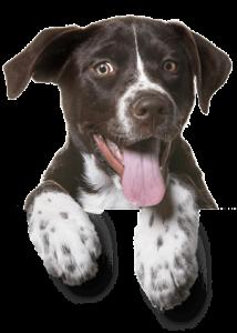 footer dog free img 1