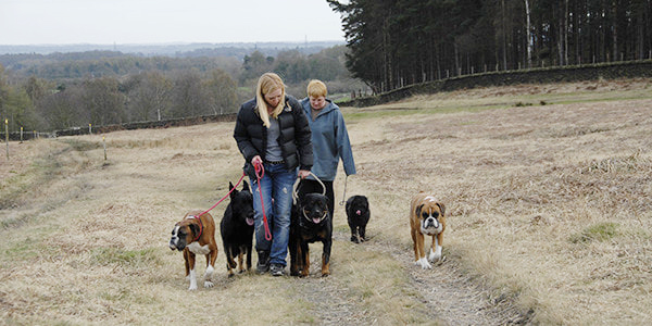 jo with dogs 2