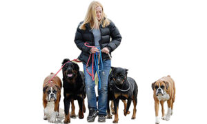 jo with dogs